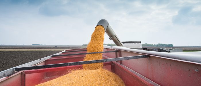 grain going into grain cart