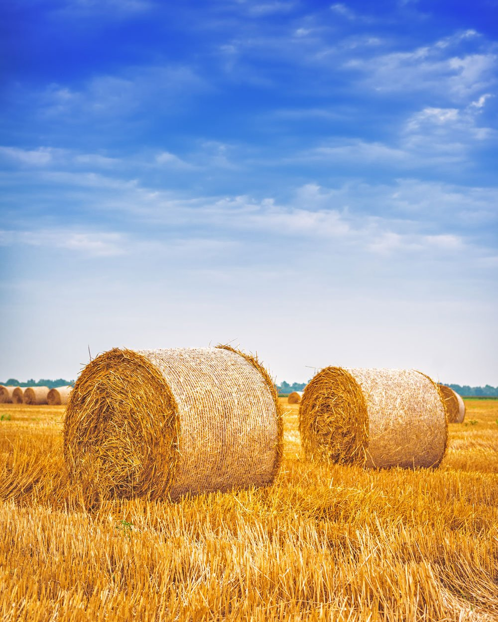 two hay bales in the country